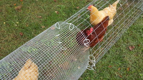 Jamie Meredith Customer Reviews Of Our Geodesic Chicken