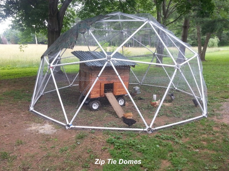 Mary Haynes Customer Reviews Of Our Geodesic Chicken